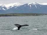 Akureyri and the Northern Area