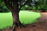 20130611_0300 green pond bolivia.jpg