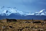 20150112_6835 rural life bolivia.jpg