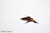 20150115_7284 humming bird bolivia.jpg