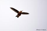 20150115_7285 bolivia humming bird.jpg