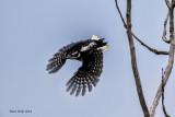 Harry Woodpecker.jpg