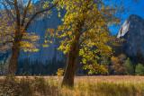 Yosemite Oaks in Fall.jpg
