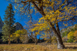 Yosemite Valley in Autumn.jpg