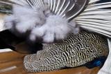 Feather Potpourri