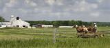 Amish Harvest, Mio/Michigan