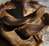 Leather Fungus