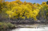 Sandhills on the Rio Grande