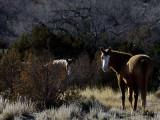 Golandrinas Mustangs