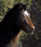 Placitas Mustang