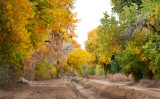 New Mexican Autumn