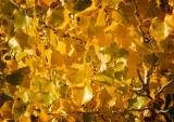 Autumn's Golden Gift
