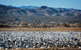 Morning, Roosting Pond, Bosque del Apache NWR
