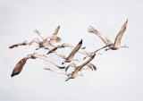 Flock Flight