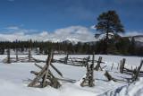 Snowy Meadow, Durango, Colorado