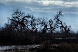 A Walk Along the Rio Grande