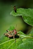By Jiminy