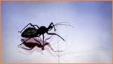 Those Bugs...