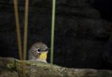 Peek A Bird