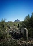 Suguaro Trail