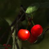 It's the Cherries