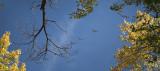 Crane Overflight
