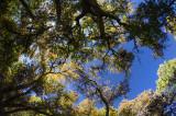 Bosque Canopy
