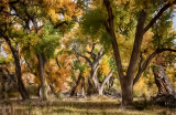 Enchanting Autumn Morning in the Bosque