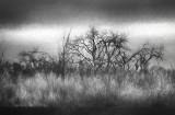 Bosque Silhouette