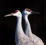 Bookends - Sandhill Cranes