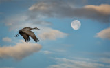 Last Full Moon-Crane Shot