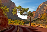 Morning in Zion Canyon