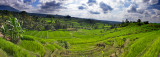 Rice Terraces at Jatiluwih #2