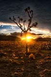 Sunburst & Silhouette