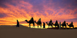 Sunset Dune Silhouettes