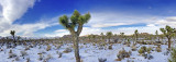 New Year's Eve Snow Pano