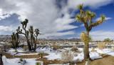 JT Snow Panorama A2