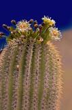 Life on the Sonoran Desert