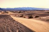 Mojave Morning