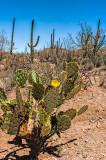 Sonoran Scenery