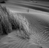 Dune Detail