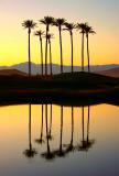 Desert Oasis #1
