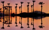 Palm Tree Silhouettes & Reflections