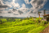 The Cultural Landscapes of Bali