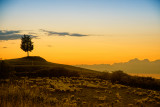 Sheep Graze in a Sunset After Glow
