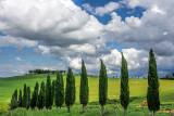 Tuscany's Cypresses