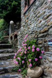 Stone wall & path with color