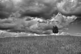 Tuscan Monochrome