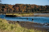Salmon Fishing - Stave River