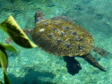 Sea Turtle - Xcaret Eco Theme Park
